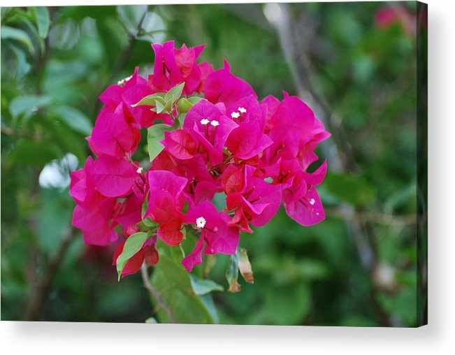 Flowers Acrylic Print featuring the photograph Flowers by Rob Hans