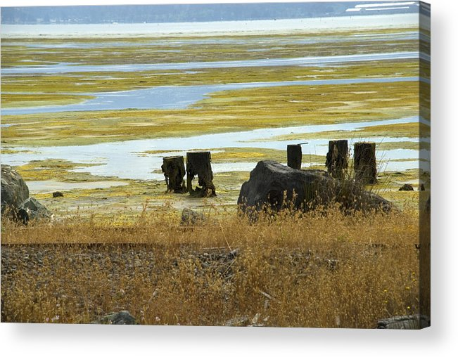 Swamp Acrylic Print featuring the photograph Forgotten Pier by Jessica Wakefield