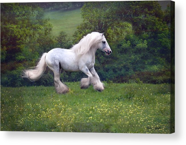 Horse Acrylic Print featuring the photograph Free Billy by Fran J Scott