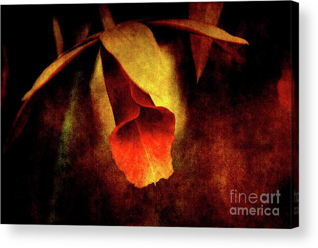 Orchid Acrylic Print featuring the photograph Full Of Grace by Susanne Van Hulst