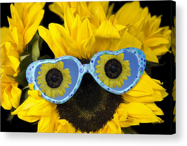 Sunflower Acrylic Print featuring the photograph Fun Shades by Maria Dryfhout