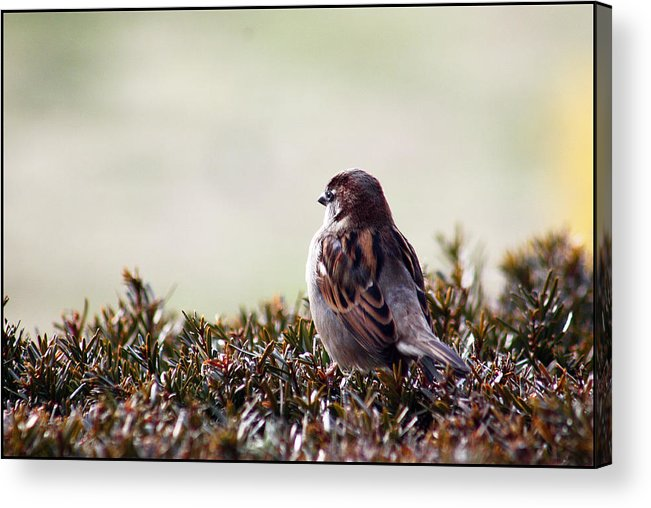 Bird Acrylic Print featuring the photograph Good Morning World by Bonnie Rovere