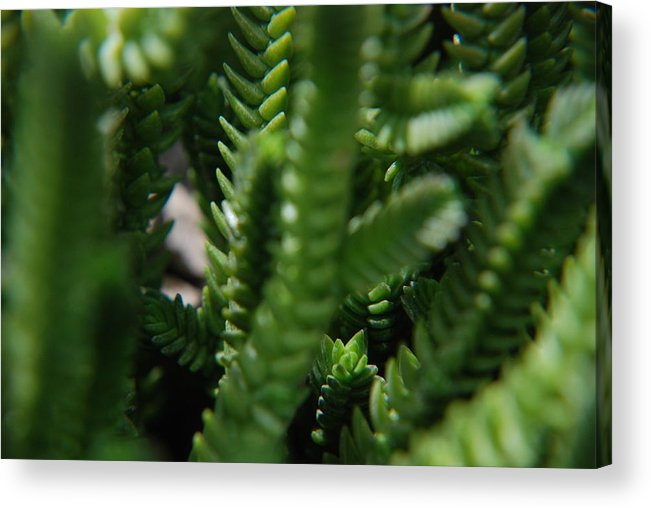 Photography Acrylic Print featuring the photograph Green Gummies by Renee Holder
