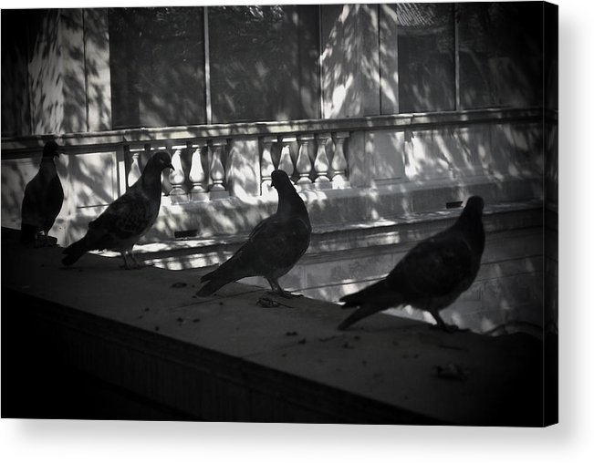 Birds Acrylic Print featuring the photograph Holding Court by Tim Nyberg