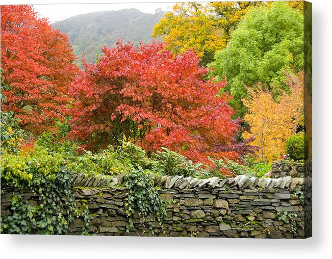 Leaves Acrylic Print featuring the photograph Incredible Fall Colors by Charles Ridgway