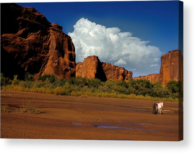Horses Acrylic Print featuring the photograph Indian Ponies In The Canyon by Jerry McElroy