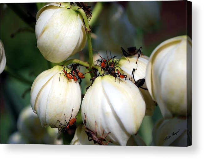 Insect Acrylic Print featuring the photograph Insect Party by Mattie Bryant