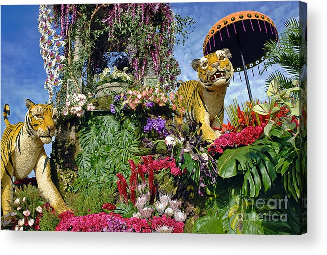 Tournament Of Roses Acrylic Print featuring the photograph Its A Jungle Out There by David Zanzinger