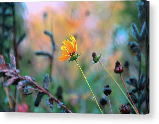 Flowers Acrylic Print featuring the photograph Late Summer Rain From The Forest Floor by Bob Orsillo