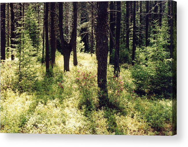 Boreal Forest Acrylic Print featuring the photograph Light In The Forest by Lyle Crump