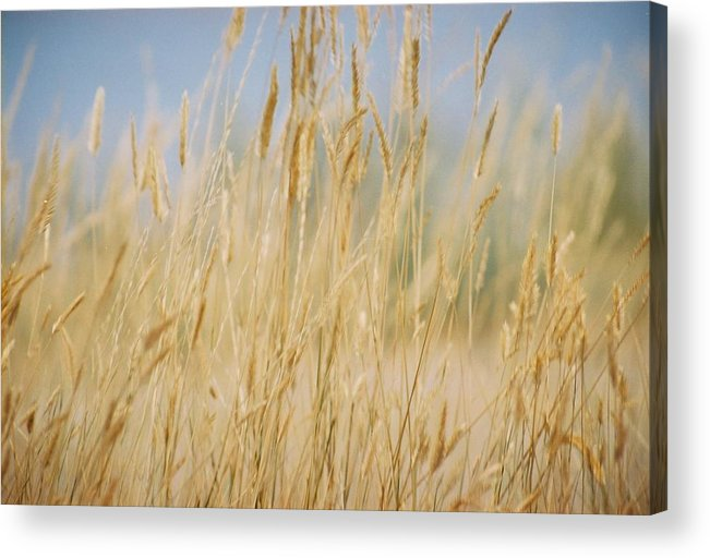 Montana Acrylic Print featuring the photograph Montana Epidemic by Jennifer Trone