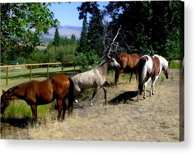 Horse Acrylic Print featuring the photograph Montana Horses by Ralph Perdomo