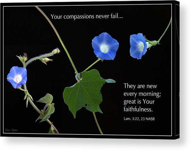 Morning Glory Acrylic Print featuring the photograph Morning Glory Composite by Greg Taylor