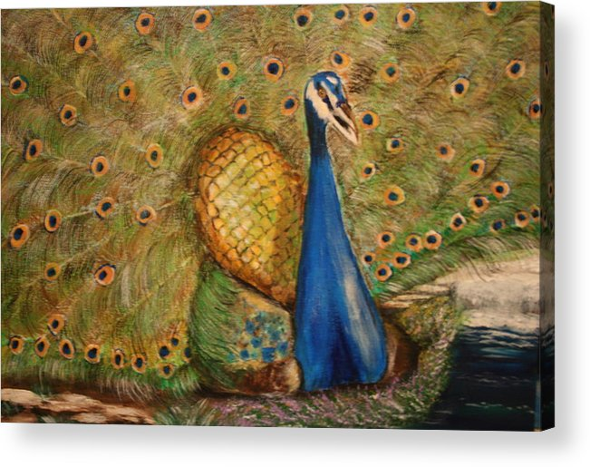 Peacock Acrylic Print featuring the painting Nbc Pride by Dyanne Parker