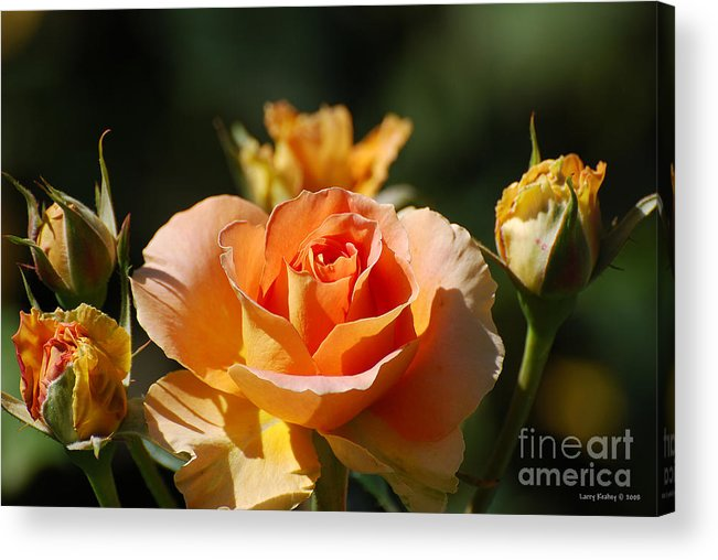 Flowers Acrylic Print featuring the photograph O Range-ment by Larry Keahey