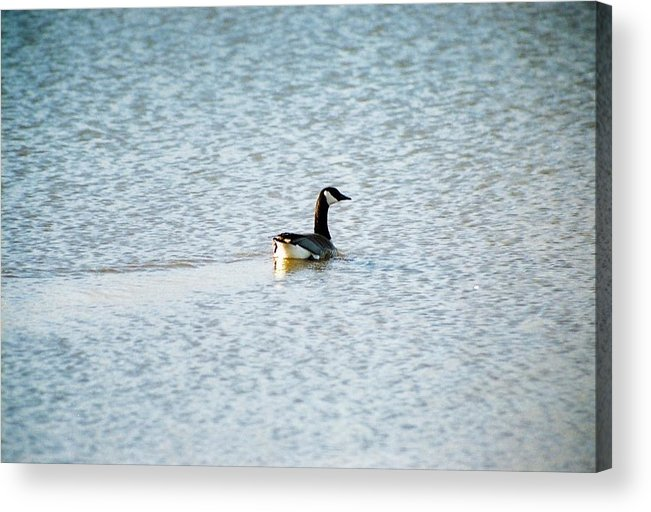 Water Acrylic Print featuring the photograph On Blue Water by Jennifer Trone