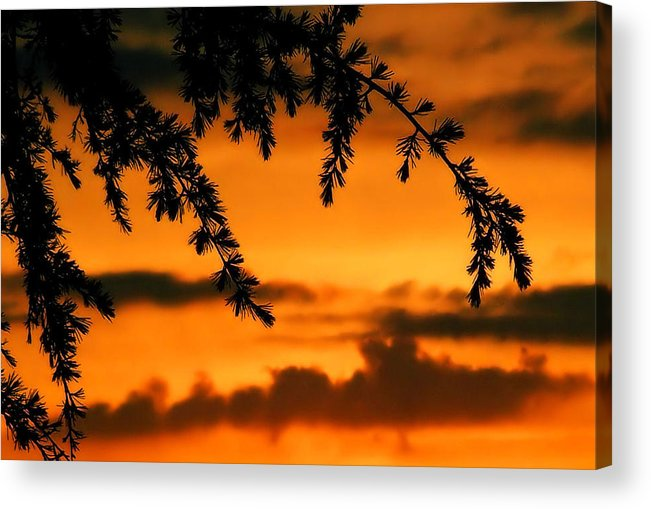 Sunset Acrylic Print featuring the photograph Out Reaching by Karen Scovill
