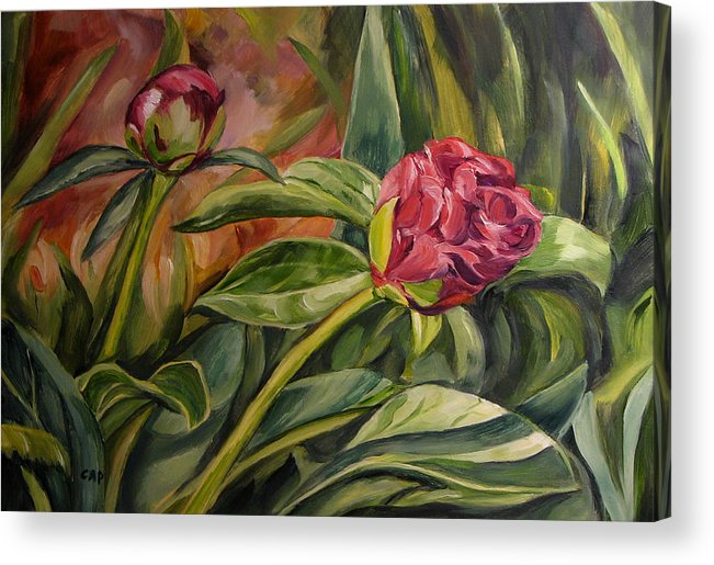 Garden Acrylic Print featuring the painting Peony Buds by Cheryl Pass