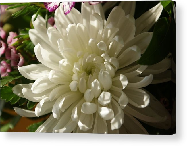 Flower Acrylic Print featuring the photograph Petals Profusion by Cricket Hackmann