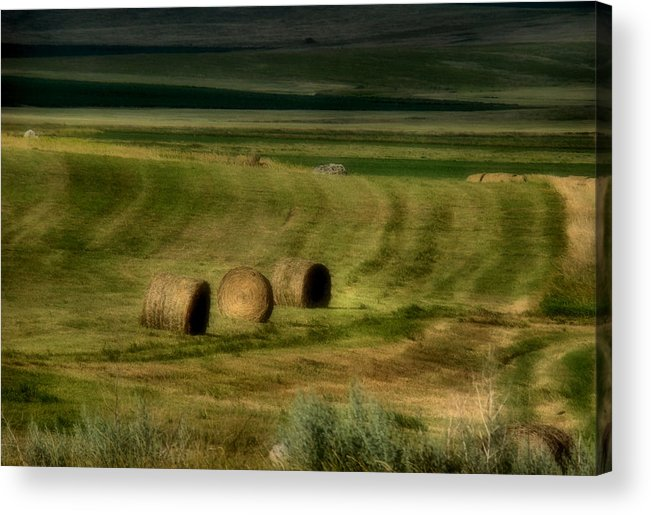 Hay Acrylic Print featuring the photograph Prairie Grace by Tingy Wende