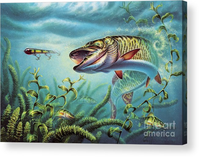 Muskie Acrylic Print featuring the painting Provoked Musky by Jon Q Wright