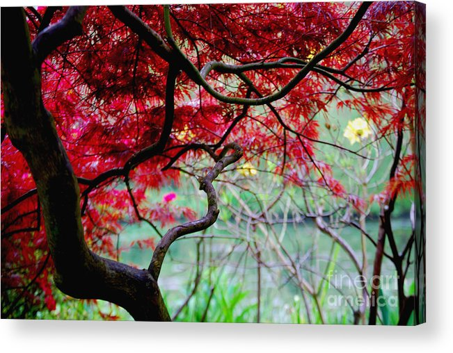 Acrylic Print featuring the photograph Red Japanese Maple by Nancy Bradley