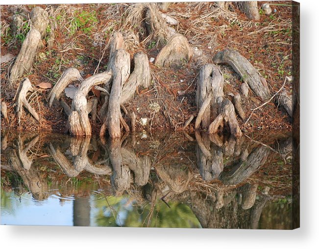 Roots Acrylic Print featuring the photograph Rooted Reflections by Rob Hans
