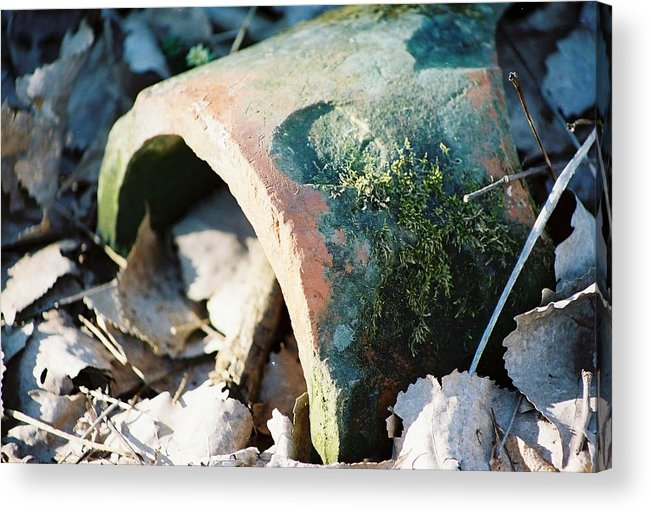 Moss Acrylic Print featuring the photograph Rotting Heart For You by Jennifer Trone