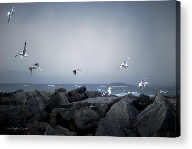 Landscape Acrylic Print featuring the photograph Seagulls In Flight by Larry Keahey