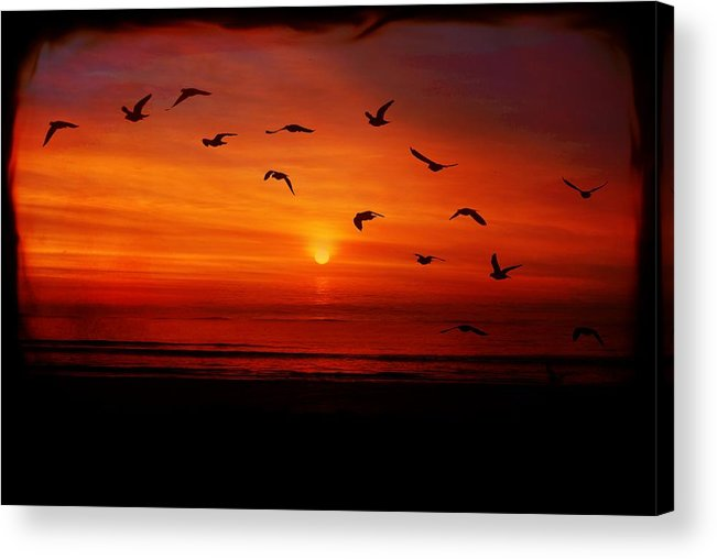 Seagulls Acrylic Print featuring the photograph Seagulls In The Morning by Mattie Bryant
