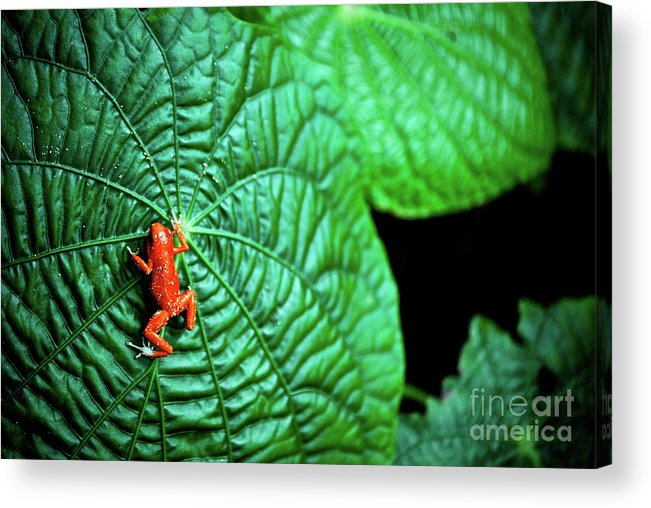 Amazing Acrylic Print featuring the photograph Selva Tropical by Cesar Marino