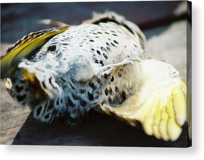 Death Acrylic Print featuring the photograph Snuffed Out And Eaten by Jennifer Trone