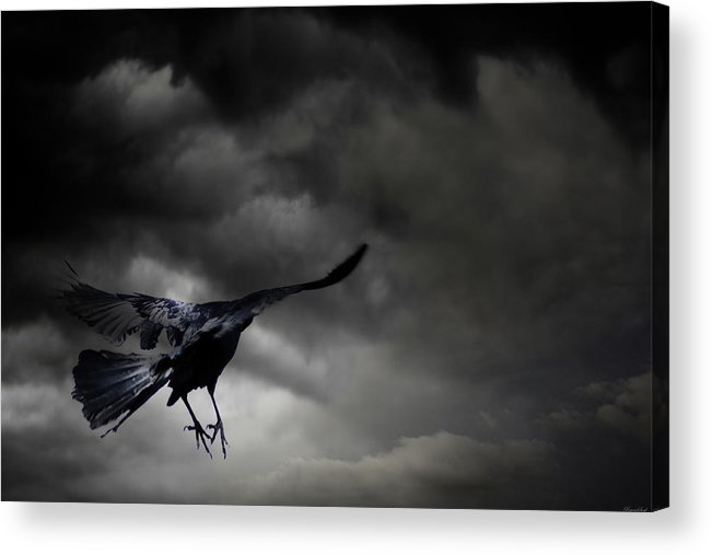 Crow Acrylic Print featuring the photograph Solitude by Yvonne Emerson