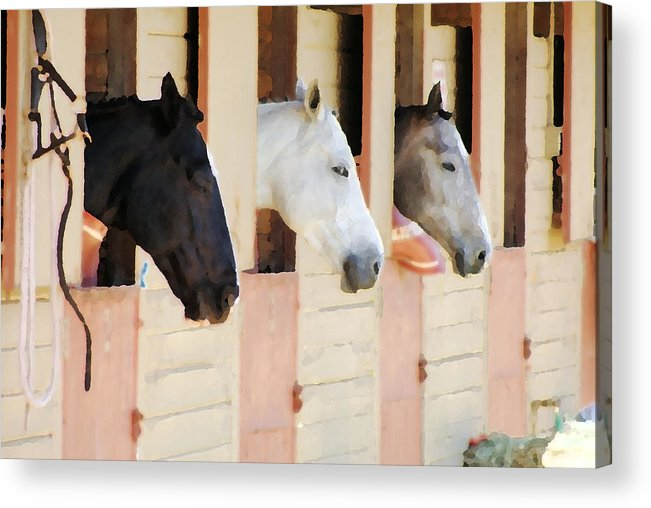 Horse Acrylic Print featuring the photograph Stable Series by Ellen Lerner ODonnell