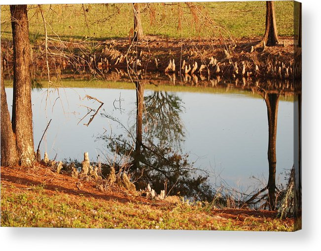 Water Acrylic Print featuring the photograph Sunny Pond by Rob Hans