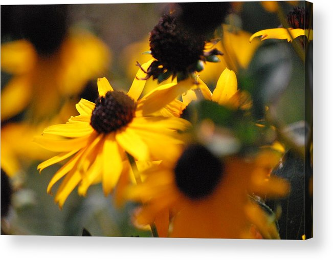 Flowers Acrylic Print featuring the photograph Sunshine And Daisies by Trudi Southerland