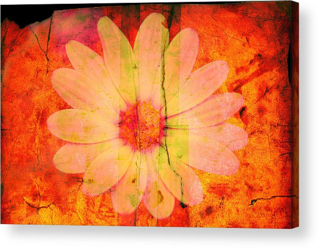 Flower Acrylic Print featuring the photograph Surprise Me by Susanne Van Hulst