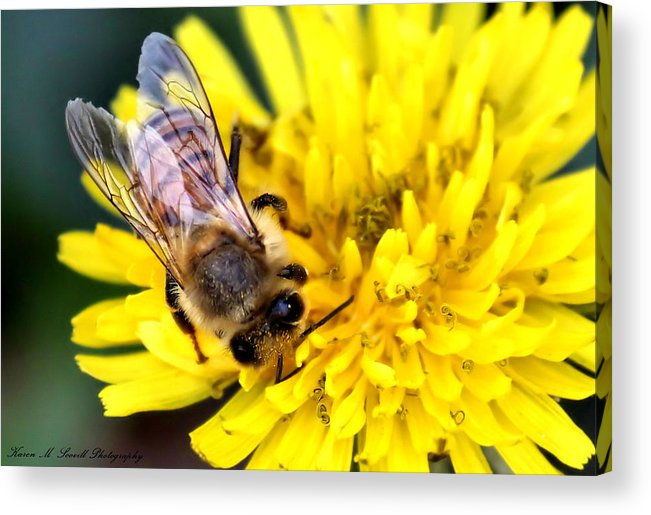 Macro Acrylic Print featuring the photograph The Bee by Karen Scovill