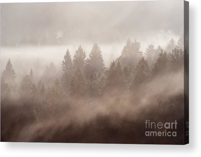 Forest Blow Acrylic Print featuring the photograph The Blow Of The Forest by Yuri San