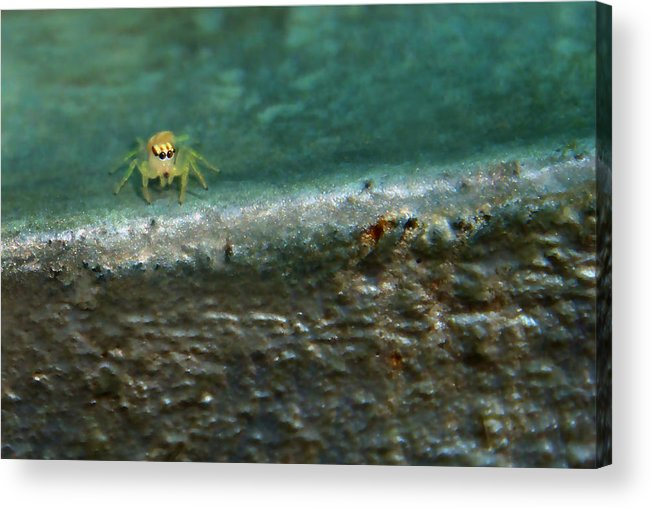 Spider Acrylic Print featuring the photograph The Itsy Bitsy Spider by Bibi Rojas