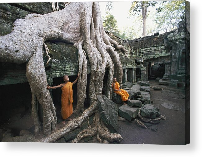 strangler Fig Trees Acrylic Print featuring the photograph The Roots Of A Strangler Fig Creep by Paul Chesley