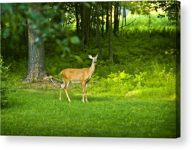 Deer Acrylic Print featuring the photograph The Visitor by Pat Carosone