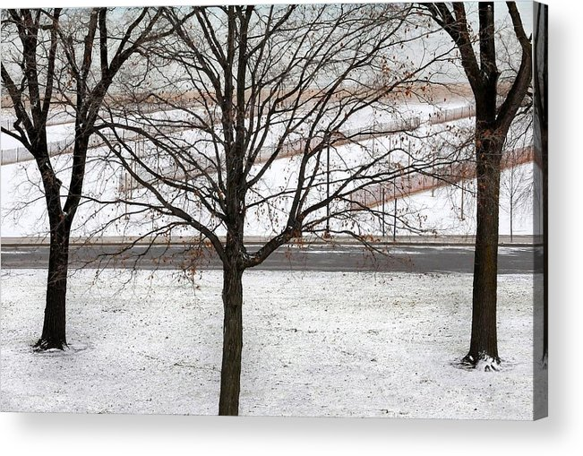 Lake Acrylic Print featuring the photograph Three Trees by Dan Holm