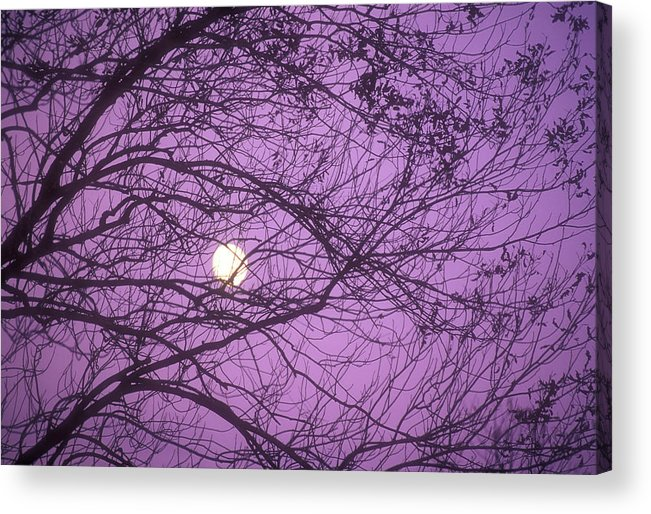 Horizontal Acrylic Print featuring the photograph Tree Silhouettes With Rising Moon In Cades Cove, Great Smoky Mountains National Park, Tennessee, Usa by Altrendo Nature