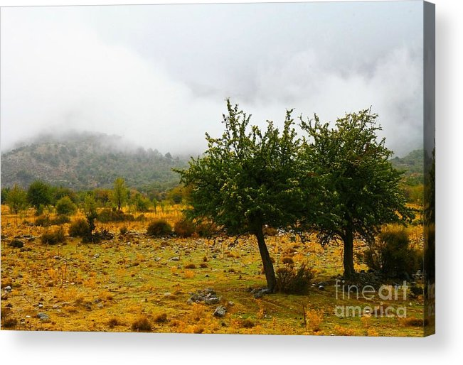Landskape Acrylic Print featuring the photograph Two Trees Together by Agusta Gudrun Olafsdottir