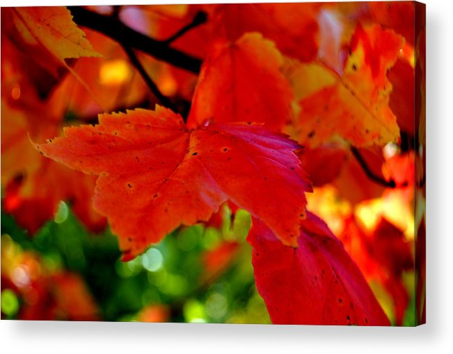 Autumn Acrylic Print featuring the photograph Up Close And Colorful by Kathleen Sartoris