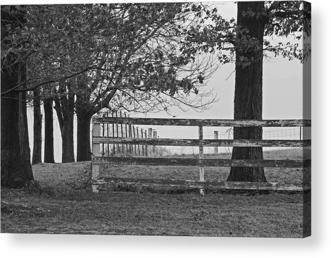 Fence Acrylic Print featuring the photograph Were You A Bad Oak by Michelle Hastings