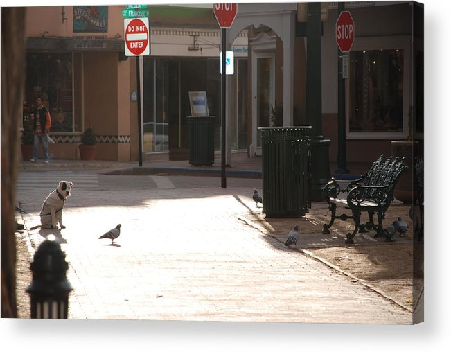 Dog Acrylic Print featuring the photograph Why Question Mark by Rob Hans