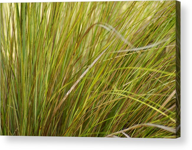 Nature Acrylic Print featuring the photograph Wild Grasses by Florene Welebny