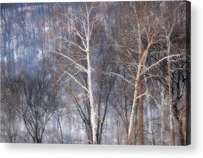 Winter Acrylic Print featuring the photograph Winter Trees by Bob Schlake